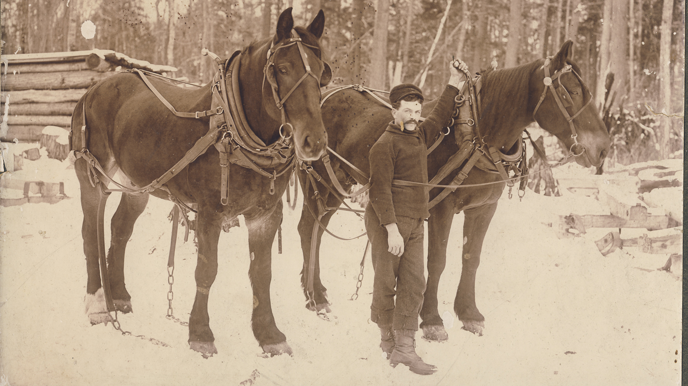 Two harnessed horses, Kinloss Township